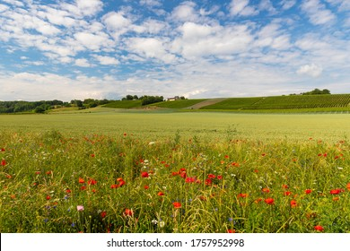 South Limburg hillside with the wine yards under a dramatic sky and in the foreground blooming wild flowers and poppy flowers