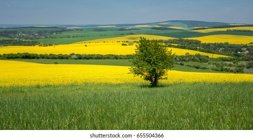 South Moravia landscape and farmland in the spring with rapeseed in the fields.