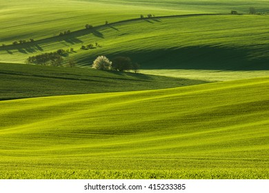 South Moravian curvy fields in the morning. Fresh green and waves makes the scene very special.
