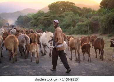 SOUTH OMO - ETHIOPIA - JANUARY 4, 2014: A herd of cattle and a farmer on the road to Turmi, Lower Lomo Valley