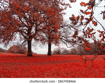 South Oxhey playing fields in red fall