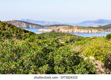 South Sardinia vegetation and beautiful coast landscape taken in Teulada, Italy.