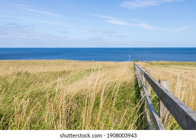 South Shields UK: 29th July 2020:  Souter Lighthouse fields at coastline on summer day - Shutterstock ID 1908003943