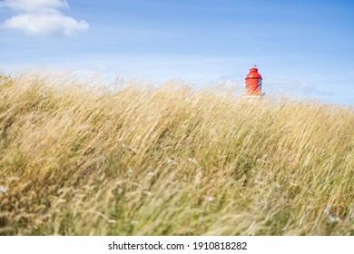 South Shields UK: 29th July 2020:  Souter Lighthouse peeping through long grass