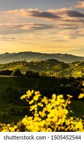 South styria vineyards landscape, near Gamlitz, Austria, Eckberg, Europe. Grape hills view from wine road in spring. Tourist destination, vertical photo