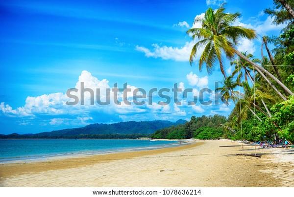 South Thailand, khao lak, White Sand Beach, swing on palm tree on the beach