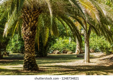south tropic exotic park outdoor natural landscape environment in clear bright vivid summer weather time good place for walking