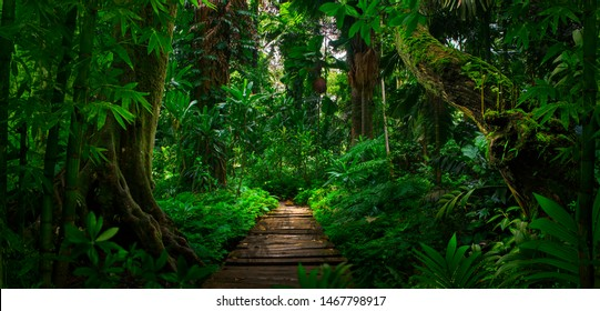 Southeast Asian tropical rainforest with path