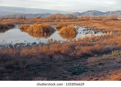 Southern Arizona pond with reed in the morning sun