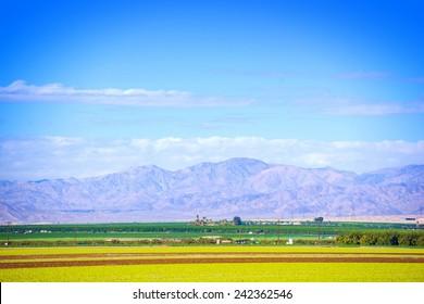 Southern California Farmlands. Coachella Valley Crop Fields.