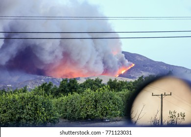 Southern California Fires 2017, wildfires that have burned. Ventura Thomas fire behind oranges trees farm, South California wildfire 2017. Emergency, climate change, natural disaster. Huge smoke trail