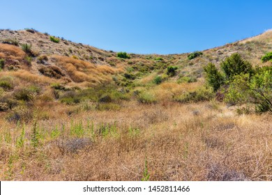 Southern California forest on dry summer morning with hiking trails and heavy chaparral for exploring the mountains