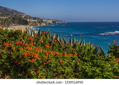 Southern California Native Plants frame Laguna Beach Coastline and Luxury Homes
