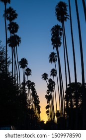 Southern California Palm-Tree-Lined Street During Sunset