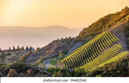 Southern California vineyards on a hillside, with hazy mountain background