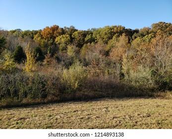 Southern Illinois Beauty