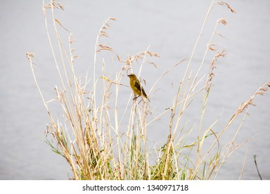 Female Weaver Bird Images, Stock Photos & Vectors | Shutterstock