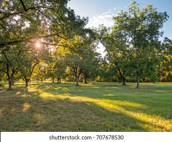 Southern Pecan Orchard at sunset