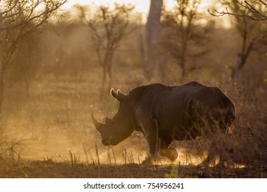 Kruger National Park Sunrise Images, Stock Photos & Vectors