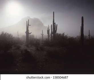 "The southwest desert saguaro can only be found in Arizona, Northern Mexico and southeast California. /Saguaro/ The saguaro can be found in many different lights but still says ""southwest""."