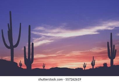 Southwest Desert - Vintage Colorful Sunset in Wild West Desert of Arizona with Cactus
