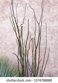 Southwest Plant Against Southwest Architecture