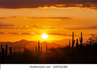 Southwest Sunset over saguaro Cactus silhouette