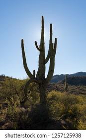 Southwestern desert scene with Saguaro cactus and arid landscape in Skull Valley, near Prescott, Arizona