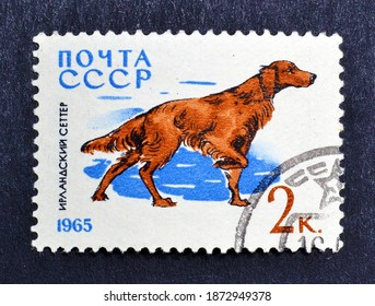 Soviet Union - circa 1965 : Cancelled postage stamp printed by Soviet Union, that shows Irish Setter (Canis lupus familiaris), circa 1965.