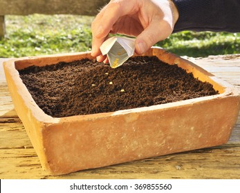 sowing in a old seed pan made of brick