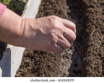 Sowing of seed in the prepared furrows