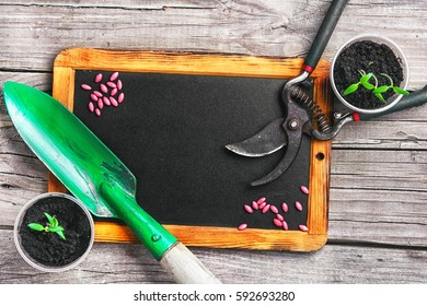 Sowing seeds of spring flowers and garden tools