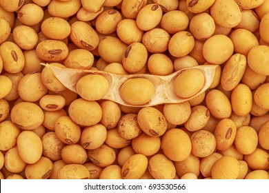 Soy bean, close up.  Open soybean pod on dry soy beans background