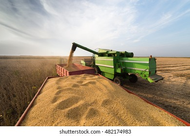 Soy beans in tractor trailer