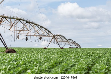 Soya plantation in the Brazilian Midwest with artificial irrigation of Central Pivot. Green leaves in fertile soil and warm sun.