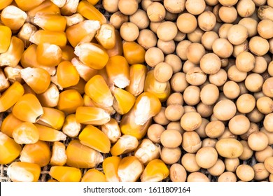 soybean and corn seeds in Brazil