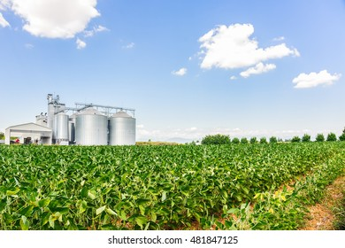 Soybean field. In the background, blurred a drying plant and silos