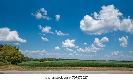 Soybean field with blue sky and clouds