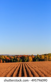 Soybean field in-front of colorful trees with copy space.