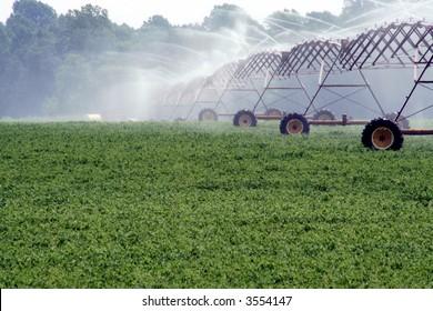 Soybean Field & Irrigation