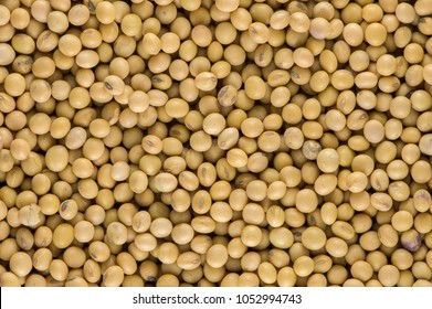 Soybean organic background