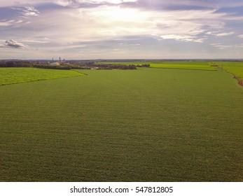 Soybean plantation