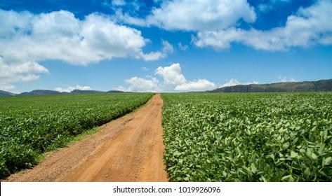 soybean plantation road montain brazil