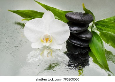 spa Background - white orchids black stones and bamboo on water