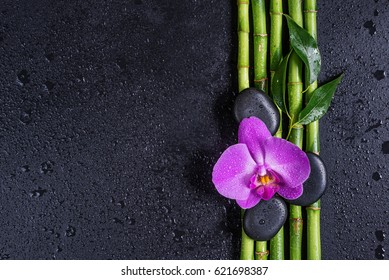 Spa concept with black basalt massage stones, pink orchid flower and a few stems of Lucky bamboo covered with water drops on a black background; with space for text