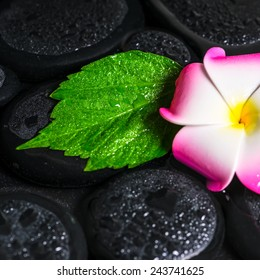 spa concept of green leaf hibiscus, plumeria on zen basalt stones with drops in water, closeup