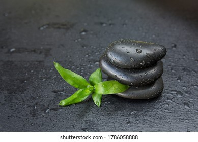 Spa concept with green lucky-bamboo sprout and a pile of black basalt massage stones are on a black slate background covered with water drops, with copy-space