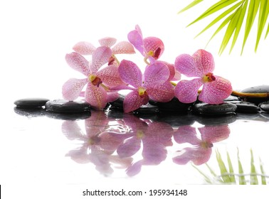 Spa concept with green palm, orchid on black stones