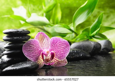 spa concept with orchid and stones
