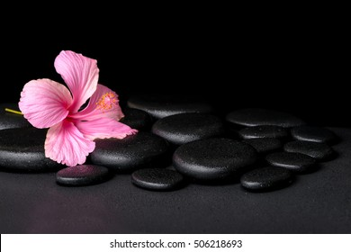 Hibiscus Flower Black Background Images Stock Photos Vectors